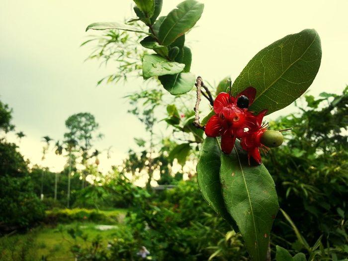 米老鼠 Flowers#nature#hangingout#takingphotos#colors#hello Worldflorafauna F