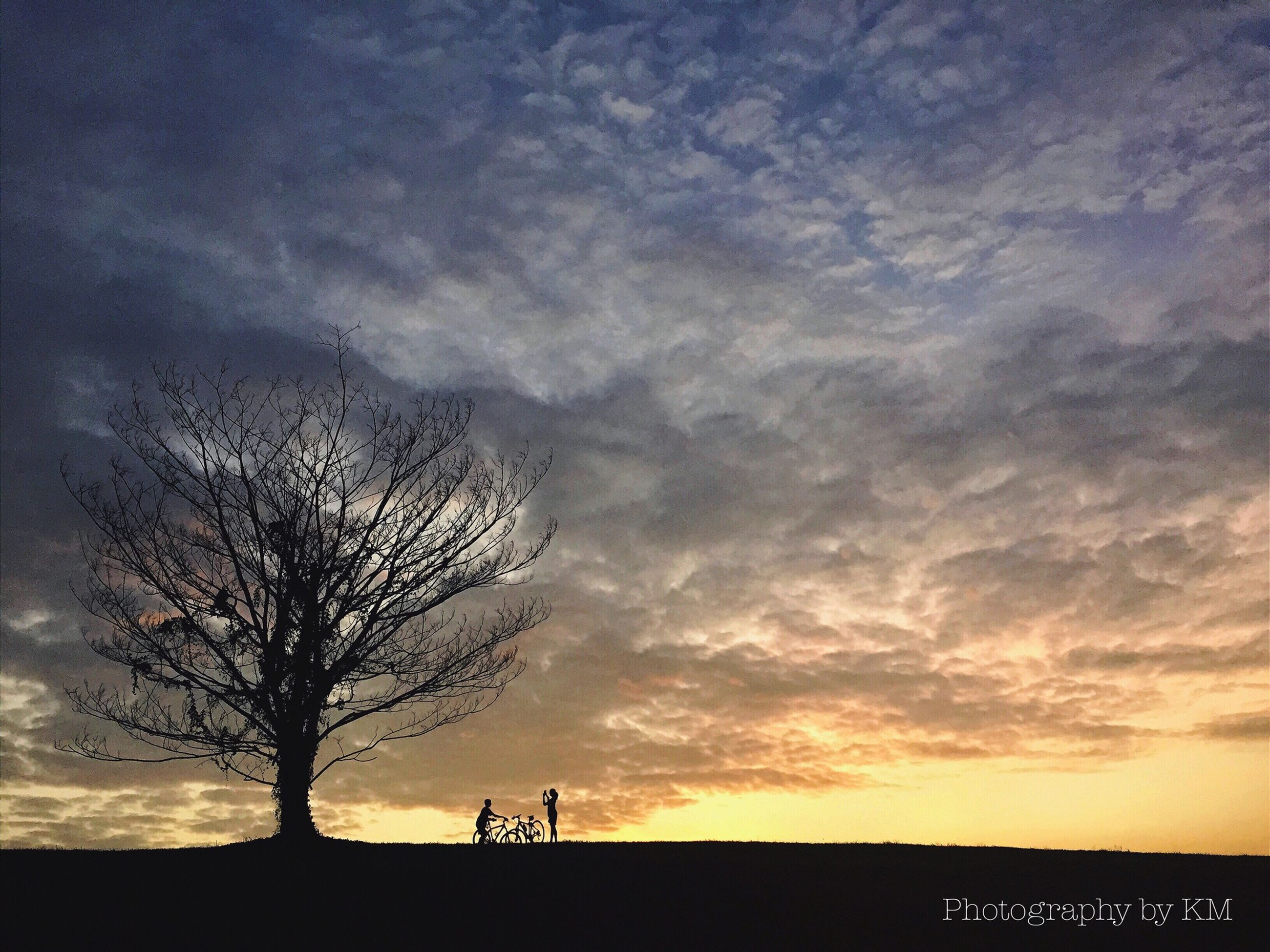 silhouette, sky, sunset, bare tree, cloud - sky, tranquility, tranquil scene, tree, beauty in nature, scenics, landscape, nature, cloud, cloudy, field, dusk, branch, idyllic, outline, outdoors