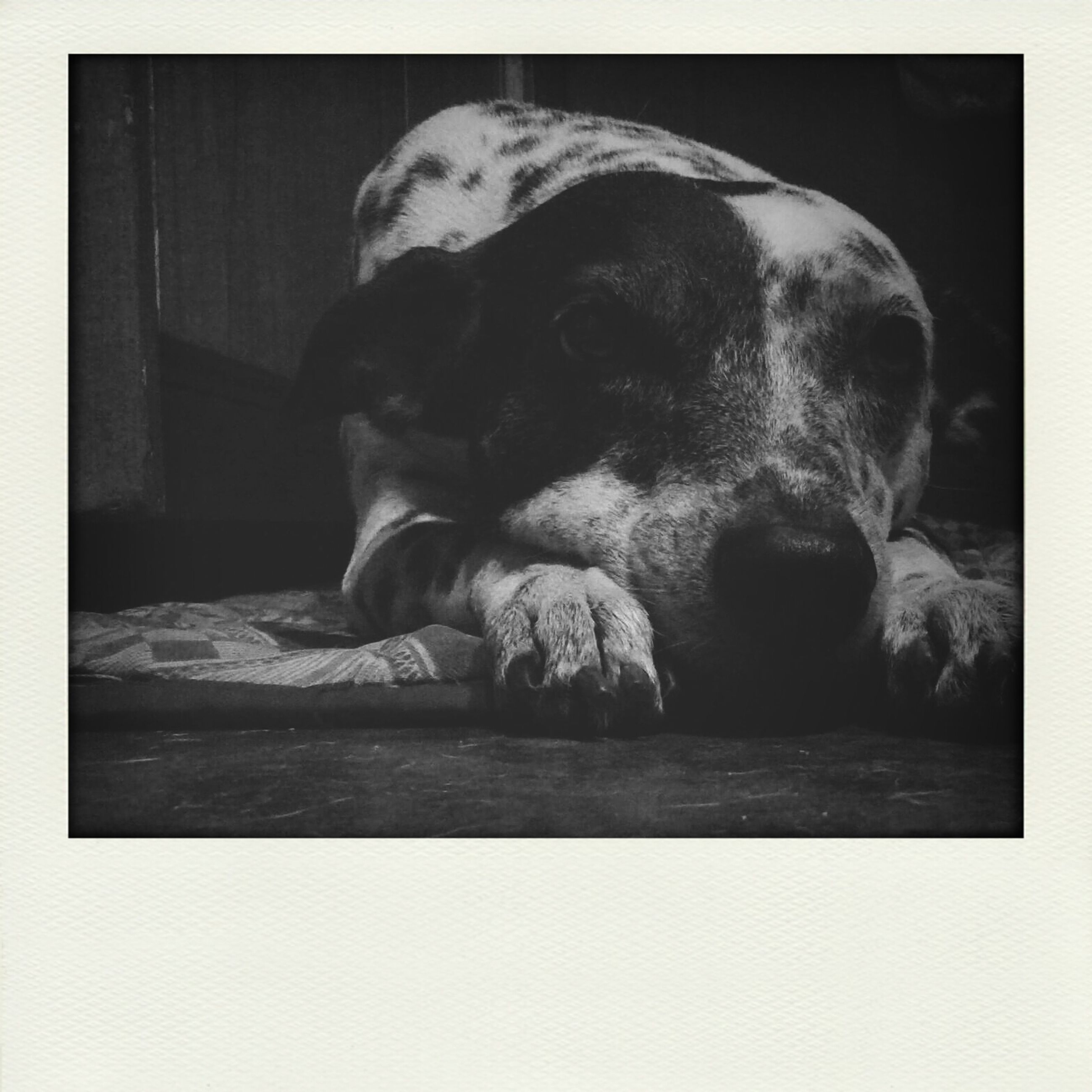 dog, pets, domestic animals, one animal, animal themes, mammal, indoors, relaxation, no people, animal head, close-up, sleeping, lying down, portrait, day