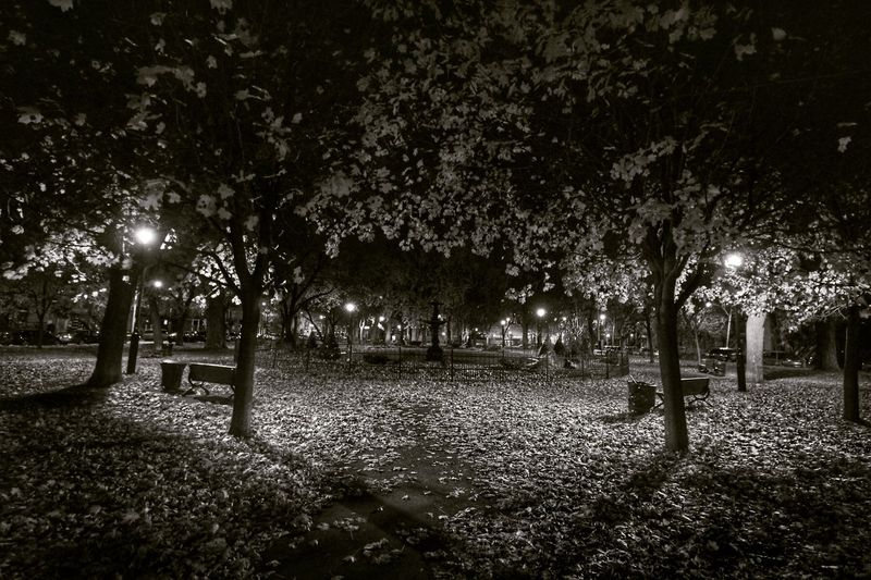 Park Nightphotography Montréal Autumn Autumn Leaves Blackandwhite Black And White Black & White Urbanphotography