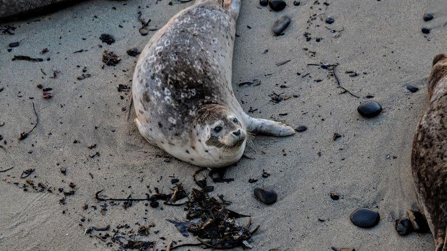 Photo taken in Santa Cruz, United States
