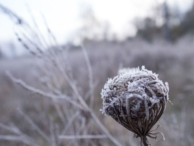 Backgrounds Close Up Close-up Detail Frost Frosty Mornings Ice Crystals Plant Plant Life Winter Winter Wonderland