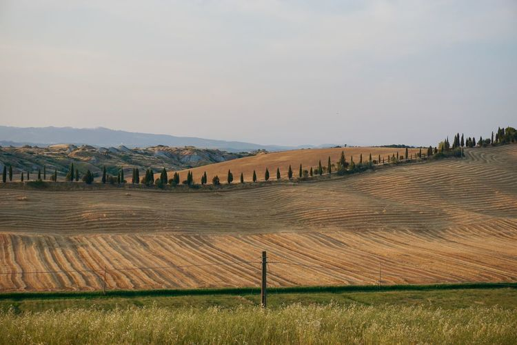 Golden Grass Italy❤️ Landscape No People Trees Trees And Sky Tuscany Countryside