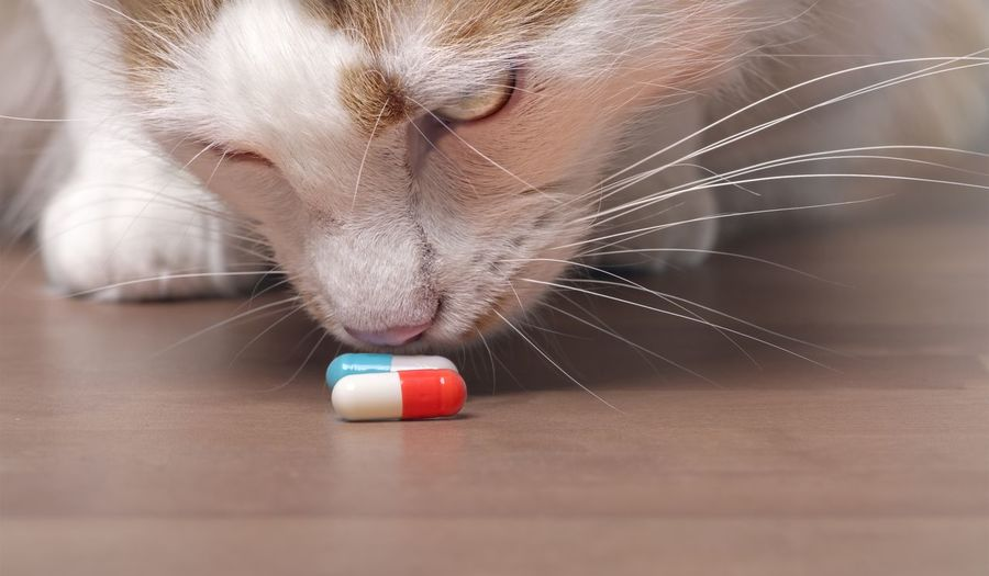 Cute tabby cat sniffs on medicine capsules. Cats Of EyeEm Medicine Animal Animal Body Part Animal Head  Animal In Danger Animal Themes Capsules Cat Close-up Domestic Domestic Animals Domestic Cat Feline Focus On Foreground Indoors  No People One Animal Pentax Pets Selective Focus Tabby Cat Table Vertebrate Whisker
