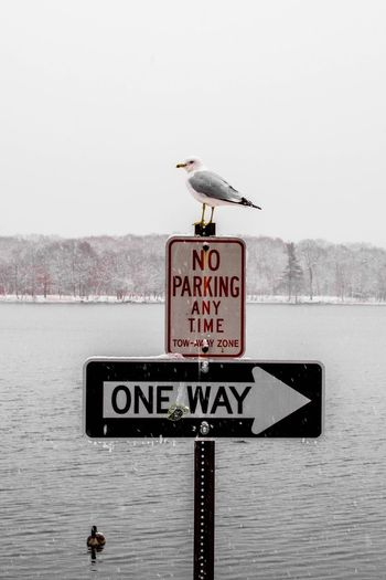 Seagull perching on road sign by sea against clear sky