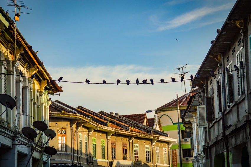 Building Exterior Architecture Outdoors Sky Low Angle View Built Structure City Travel Destinations Day No People Bird UNESCO World Heritage Site The Week On EyeEm Streets Of Penang Penang Malaysia Bird On A Wire Pegions On A Wire Eyeem Philippines Travel Photography Travel Destination