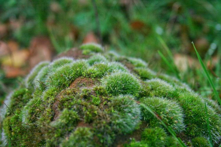 Green Color Nature Plant No People Fragility Outdoors Close-up Besteyemphoto Taking Photos Check This Out Moss Moss Close Up Moss-covered