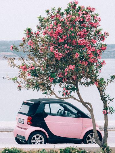 Pink Car Car Flower Greece Milos Oleander Pink Pink Color Smart Car Transportation Tree Color Palette