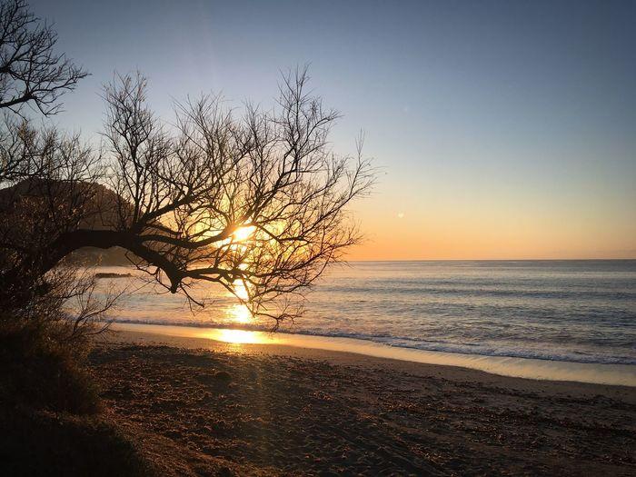 Costa de los Pinos Sunrise Coast Mallorca SPAIN Spanish Island Sky Sea Water Horizon Over Water Scenics - Nature Beauty In Nature Horizon Beach Sunset Tranquility Land Tranquil Scene Nature Sunlight No People Tree Outdoors Idyllic Plant