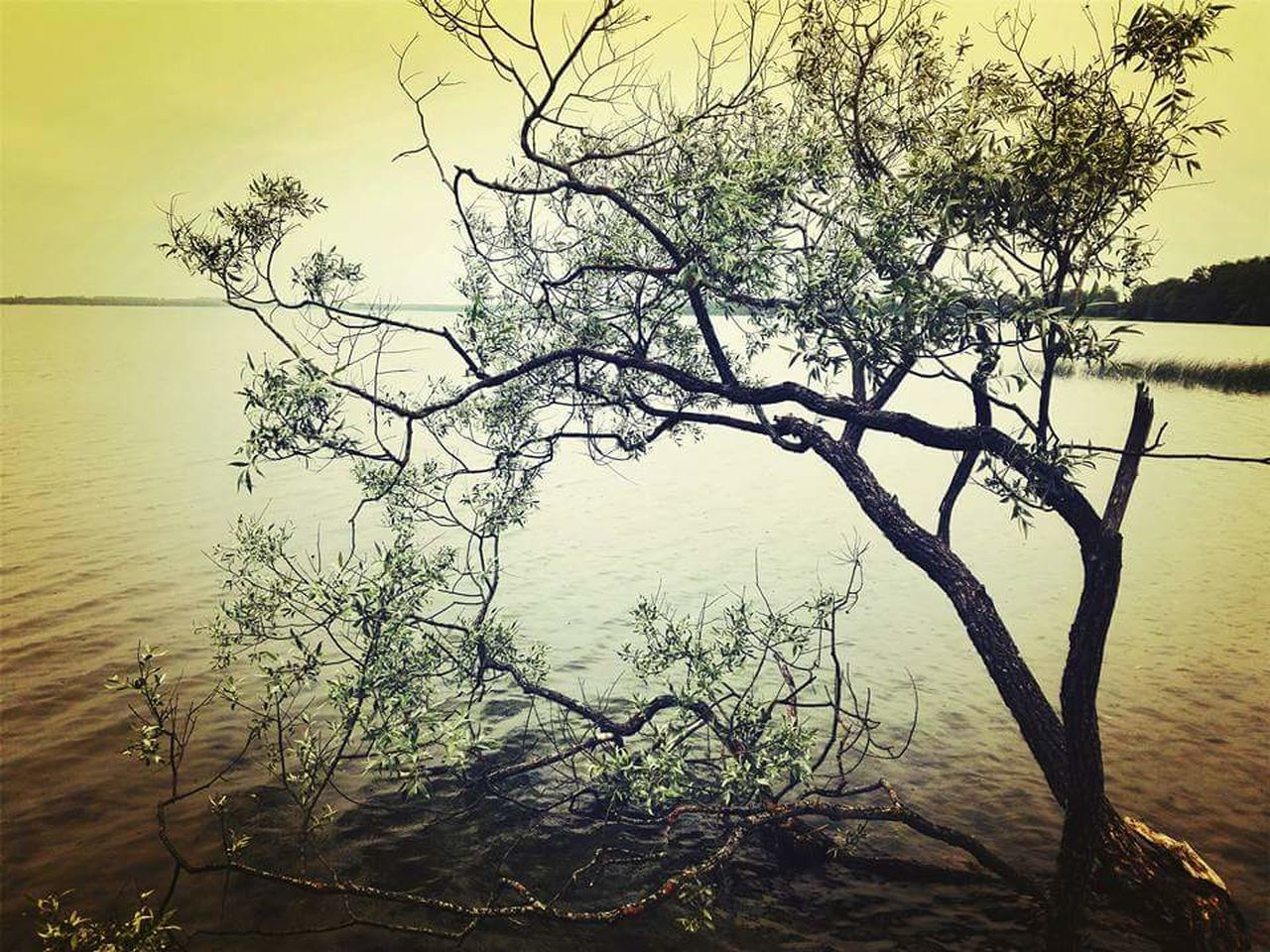 water, nature, tree, tranquility, lake, beauty in nature, branch, scenics, tranquil scene, outdoors, no people, sky, landscape, day