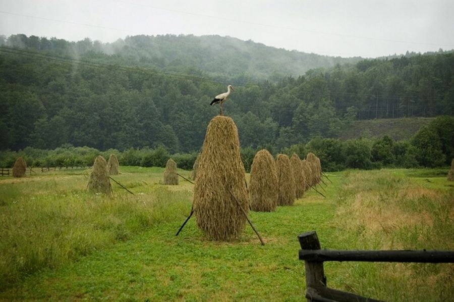 Landscape Birds Ukraine Карпаты Karpathian карпати птах птица аист