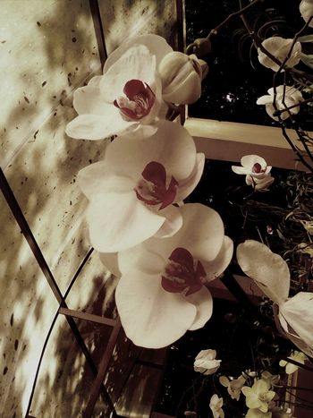 Flowers Of The World. Orquideas Flowers, Nature And Beauty