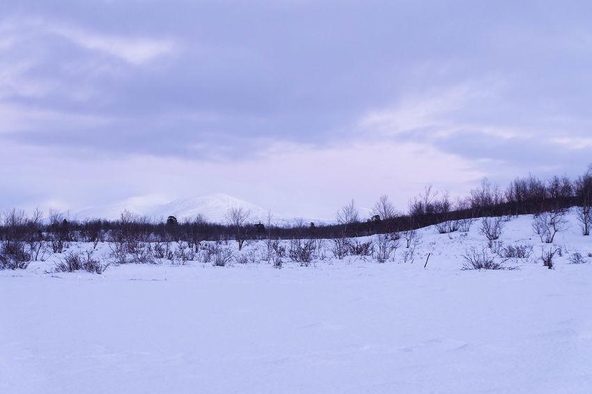 Abisko Dusk Forest Landscape Lapland Nature Snow Trees Winter