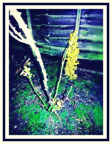 Taking Photos ❤ Rosebush Nightphotography Backyard Garden