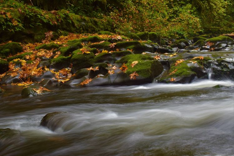 Autumn Beauty In Nature Day Forest Landscape Nature No People Outdoors River Scenics Tranquil Scene Tranquility Tree Water