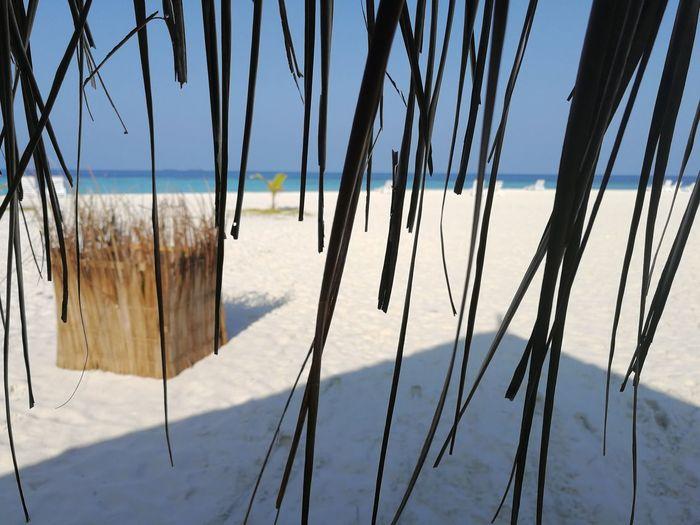 Love Maldives Hotel Holiday Honeymoon Fotography HuaweiP10 Huawei Leicacamera Thulhagiri Islandlife Island Sun EyeEm Selects Tree Water Sky Landscape Cloud - Sky Pine Tree Evergreen Tree