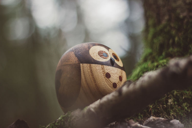Forest Wood Wooden Wood - Material Toy Toys Wooden Toys Moss Tree Owl Close-up Selective Focus Nature No People Plant Focus On Foreground Day One Animal Animal Themes Animal Animals In The Wild Animal Wildlife Outdoors Land Single Object Growth Representation
