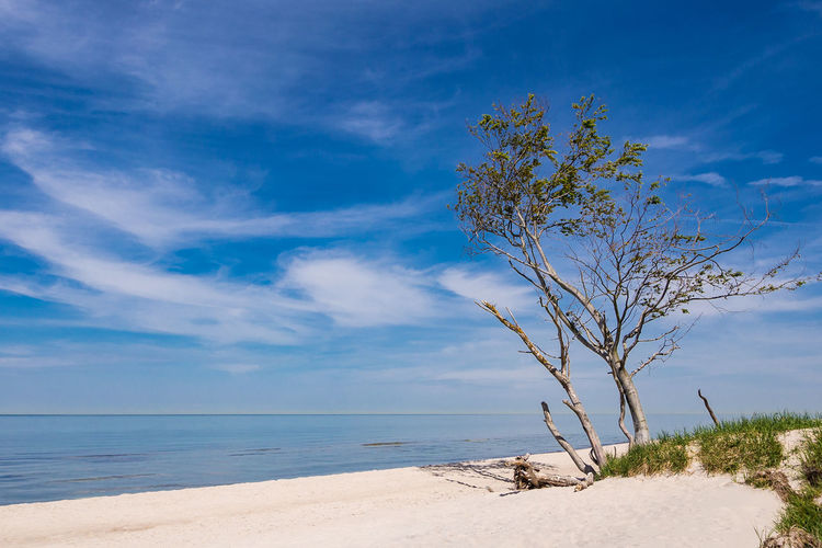Baltic Sea coast Baltic Sea Grass Holiday Relaxing Tree Weststrand Beach Blue Sky Cloud - Sky Coast Day Fischland-darß-zingst Journey Landscape Nature No People Outdoors Sand Shore Sky Tourism Travel Destinations Vacation Water