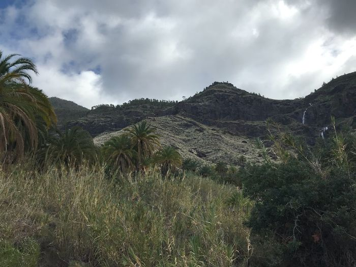 Wanderung zum Charco Azul Palm Trees Gran Canaria El Risco Cloudy Way To Charco Azul Hike Nature Landscape Sky Beauty In Nature Mountain Outdoors Day No People Grass Scenics