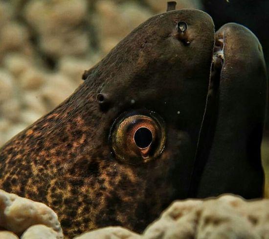 UnderSea Close-up Animal Body Part