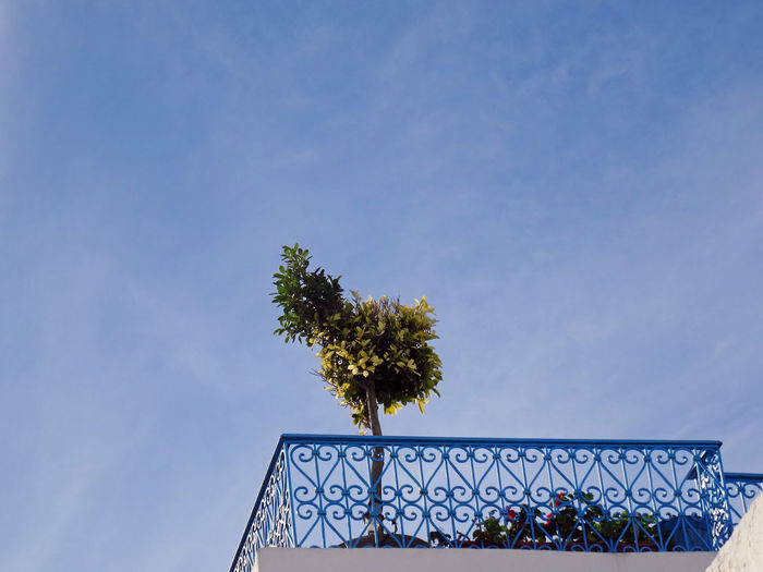 Heart Balcony Heart Shape Ironwork  Blue Balcony Holiday Theme Relaxation Terrace Blue Architecture Against Sky Beautiful Plant Oriental Mediterranean  Low Angle View 4x3photography