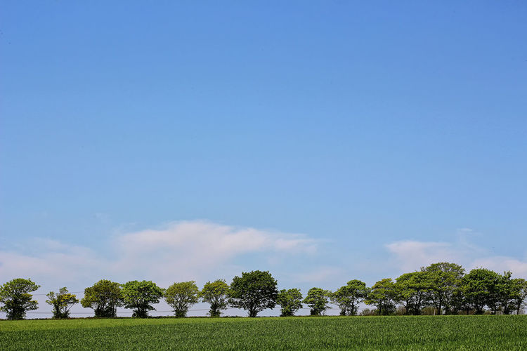 Trees on field against sky