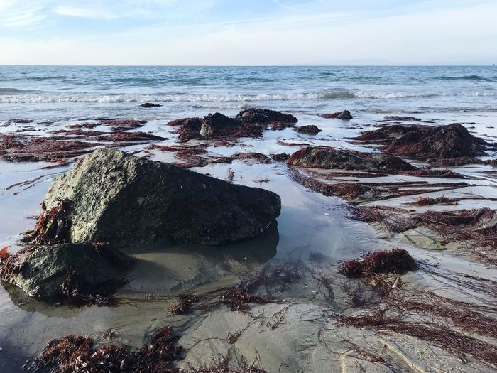 California Coast California Seaweed Rock Sea Water Rock - Object Nature Horizon Over Water Beauty In Nature No People Scenics Tranquility Beach Tranquil Scene Sky Outdoors Wave Day