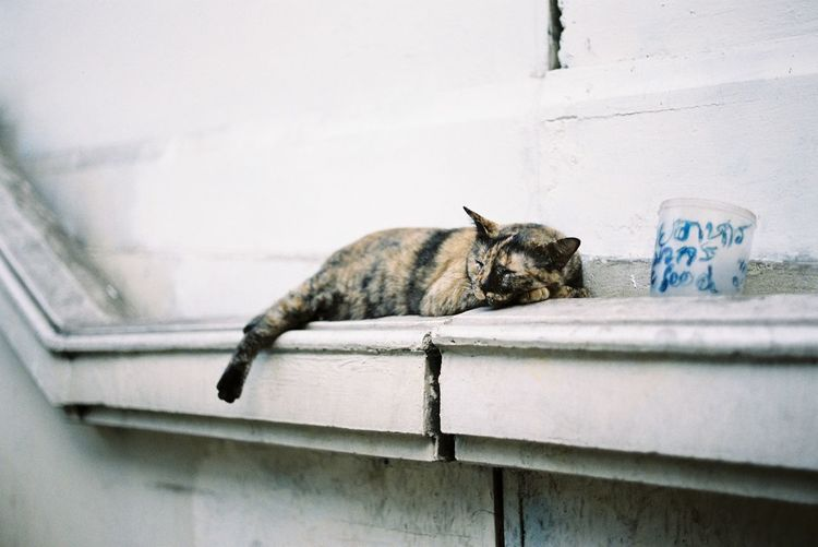 Cat resting on wall