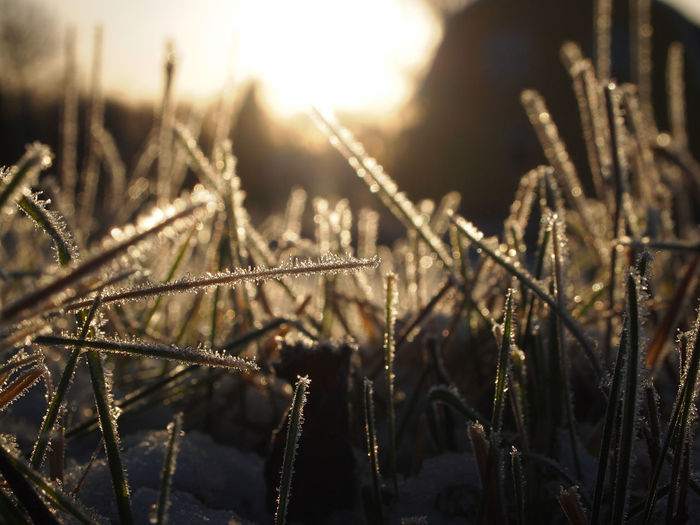 Backlight Frost Grass Low Angle View Rural Sparkling Tranquility Winter Beauty In Nature Close-up Cold Temperature Day Focus On Foreground Growth Nature No People Outdoors Plant
