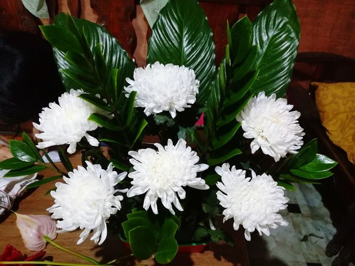 Flower Arrangement White Flowers And Buds Mums Flower Head Flower Bouquet Leaf Flower Arrangement Close-up Plant