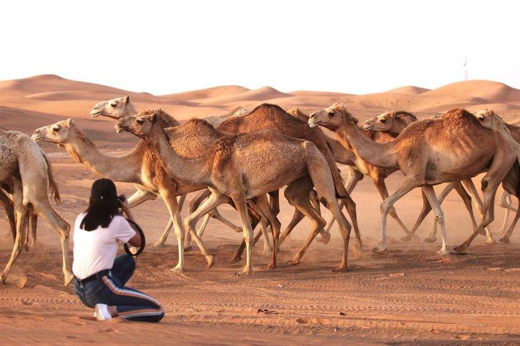 Full length of horse in desert