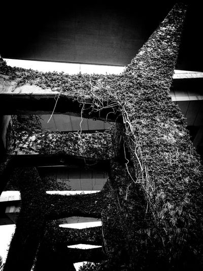 The Benjamin Sheares Flyover, Singapore Architecture Black And White Building Built Structure Climbing Plants Close-up Day Deterioration Engineering Growth Low Angle View Nature No People Sky The Architect - 2018 EyeEm Awards