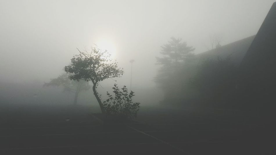 Fog Tree Foggy Weather Tranquility Tranquil Scene Scenics Beauty In Nature Outdoors No People Black And White Asphalt Branch Silhouette_collection Sillouette Silloette And Sky Weather Tree Tranquility Nature Empty Road
