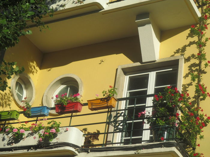Paint The Town Yellow Architecture Balcony Building Exterior Built Structure Day Flower Growth House Low Angle View Nature No People Outdoors Plant Potted Plant Tree Window Window Box