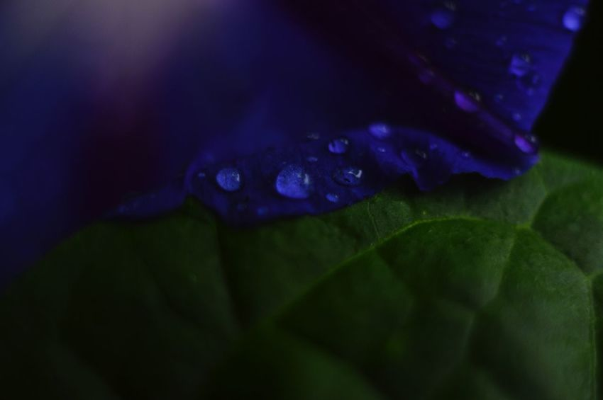 Close-up Flower Water Drop Selective Focus Beauty In Nature Nature Wet Dew Petal Plant Water Drop