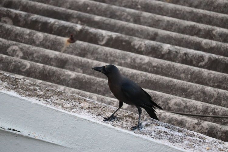 Close-up of bird perching on staircase