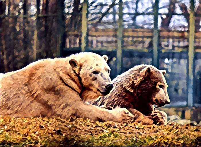 Polar bear family Animal Themes Mammal Nature Young Animal Outdoors Zoo Animals