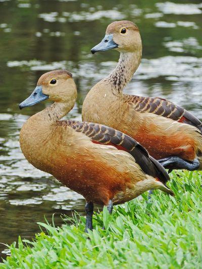 Close-up of animal in lake