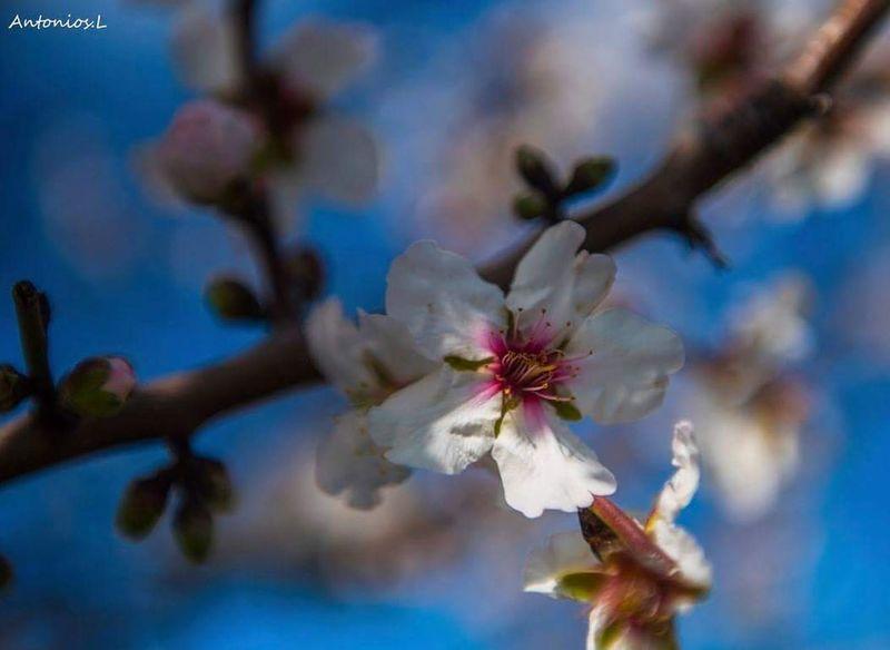 Flower Fragility Springtime Blossom Nature Growth Close-up