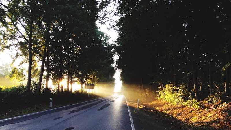Road Tree Nature Scenics Beauty In Nature Outdoors Sunrise Sunlight The Way Forward Transportation Light And Shadow Lights Light - Natural Phenomenon Mystic Mysticlight