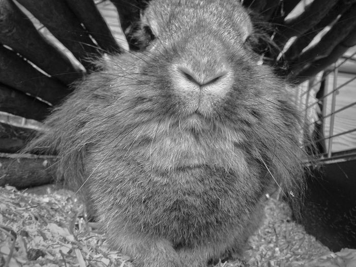 Animal Themes One Animal Domestic Animals Pets Close-up No People Indoors  Day Animals Collection Black And White Mobile Photography B&W Portrait Beauty In Nature Nature Rabbits 🐇 Rabbit Chilling Sweet Dreaming