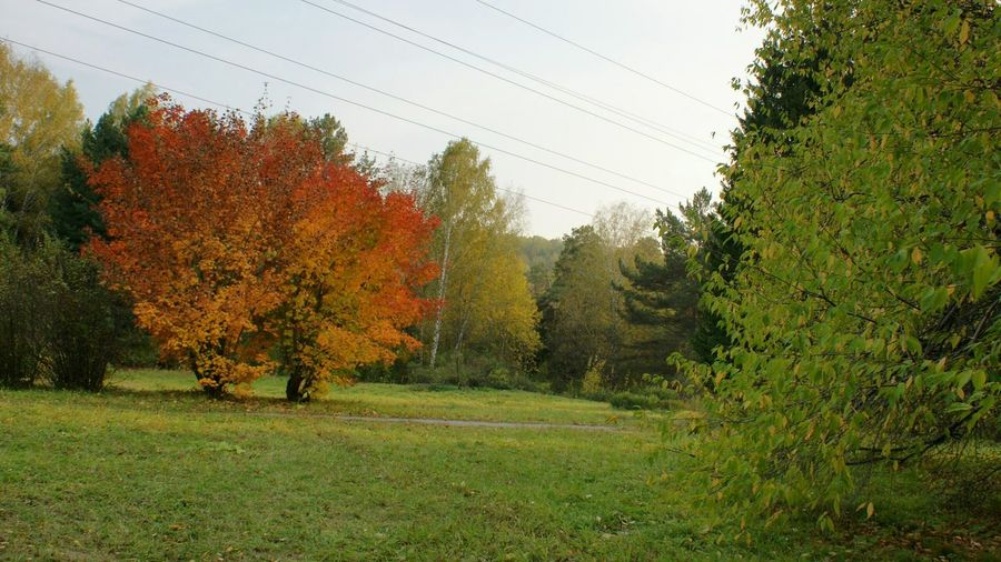 Trees on grassy field against sky during autumn