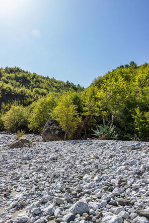 Global Warming Riverbed Beauty In Nature Clear Sky Day Dry Riverbed Dryness Nature No People Outdoors River Riverbank Rock - Object Scenics Sky Tranquil Scene Tranquility Tree Water