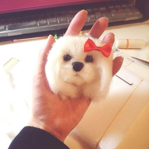 파니짱♡ Dog❤ マルチーズ Shinhwa Eric Minwoo Hyesung Dongwan Junjin Andy Shinhwa Concert Handmade 신화 앤디 이손호