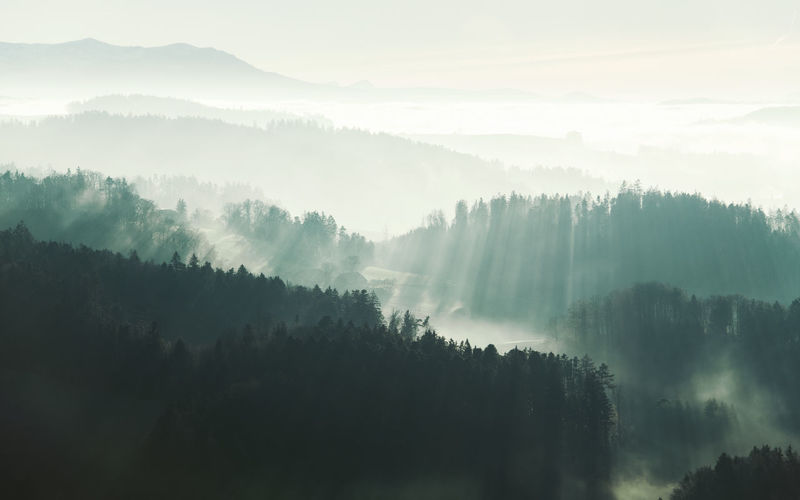 Bright Hazy  Outdoors Sunbeam Sunlight Plant Landscape Tree Fog Tranquil Scene Forest Remote