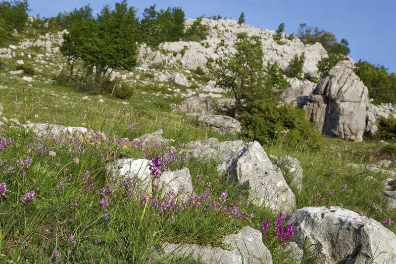 Scenic view of flowering plants on rocks