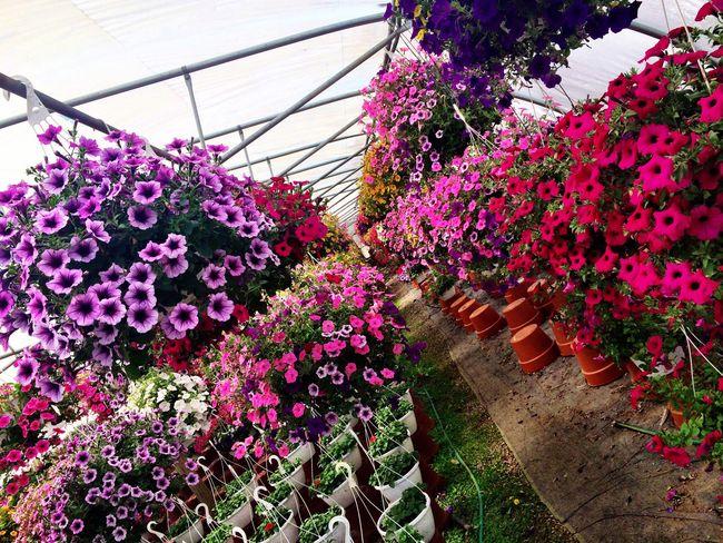 Flower Plant Nursery My Heaven Listen Within My Happy Place  Tadaa Community Tadaa Pocket_family