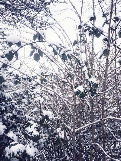 Snow Snowy