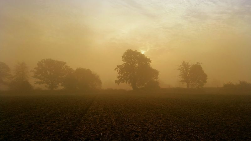 Tree Fog Nature Beauty In Nature Tranquility Landscape Tranquil Scene Outdoors Sky No People Sunrise - Dawn Sunrise N Sunsets Worldwide  EyeEm Best Shots Foggy Foggy Weather Trees