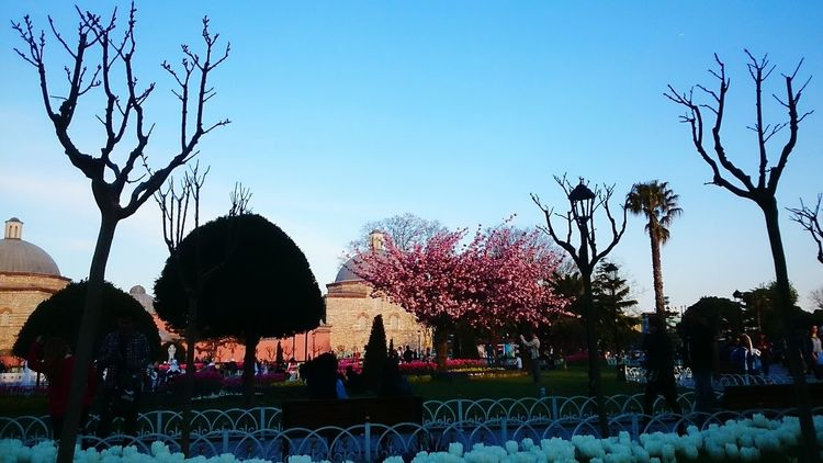 Istanbul In Spring Taking Photos Travel Photography Mobile Photography April2015 For My Own Photo Journal Turkeyphotooftheday Historical Monuments Iconic Landmark People Watching Iloveistanbul Turkey Tulips Turkey Sultanahmetsquare